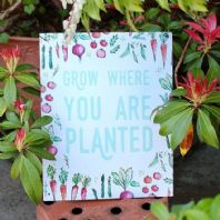 'Grow Where You Are Planted'